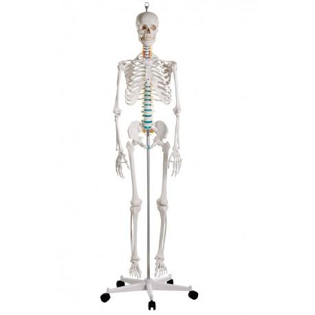Esqueleto clásico Oscar con soporte